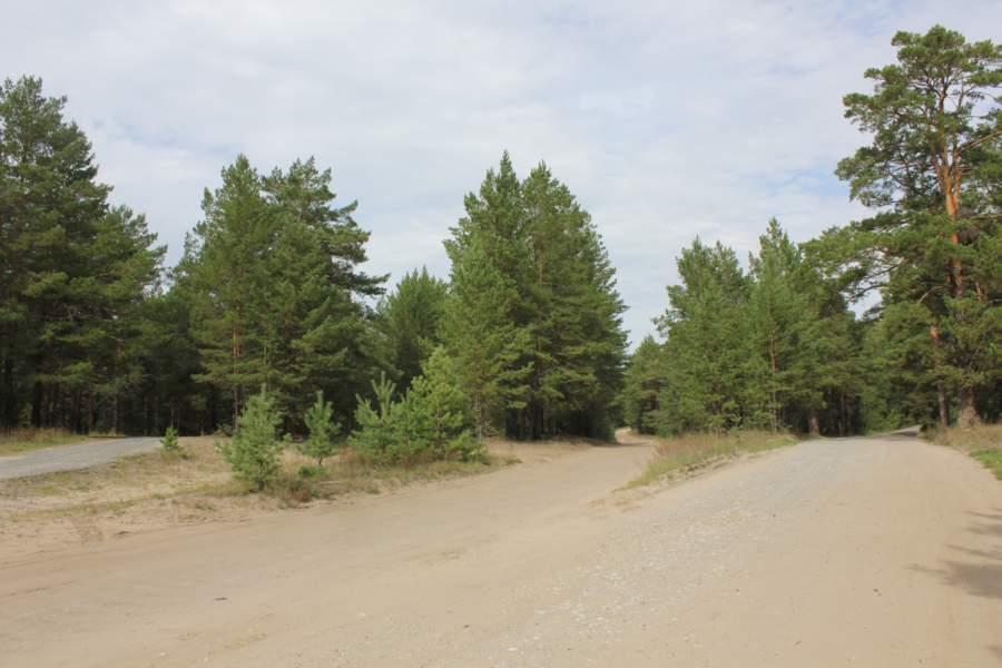 Паутина лесных дорожек. Исчезнувшая деревня Медвежанка.(Курганская область)