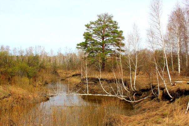 Водоёмы Шатровского района